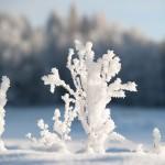13-01-Naturforomorgon-10