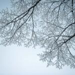 13-01-Naturforomorgon-2