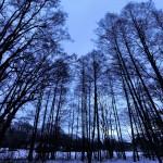 Naturfotomorgon-Lasse-2