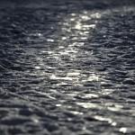 Naturfotomorgon-Lasse-4