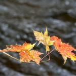 naturfotomorgon-27-oktober-20
