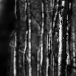 fotokurs-katterjokk-2014-31
