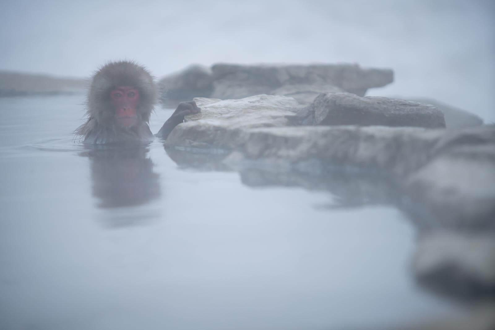 Följ med på en fotoresa till magiska japan. Fotografera japanska makaker