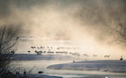 Följ med på en fotoresa till Japan. Fotografera svanar i dimma