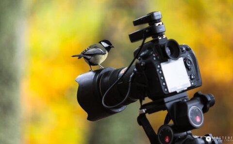 Fåglar gillar naturfoto så följ med på naturfotografering.
