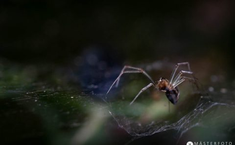 Lär dig fotografera spindlar i Tyresta nationalpark