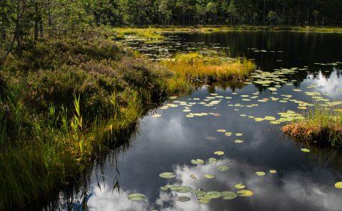 Naturfoto i Tyresta nationalpark fotokurs som lär dig fotografera