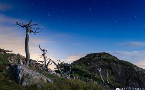 Dramatiskt träd i det månbelysta landskapet i Kullaberg. Följ med på fotokurs!